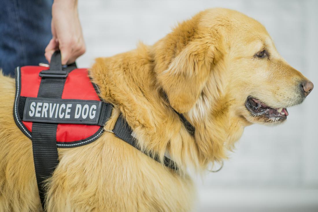 Service dog image